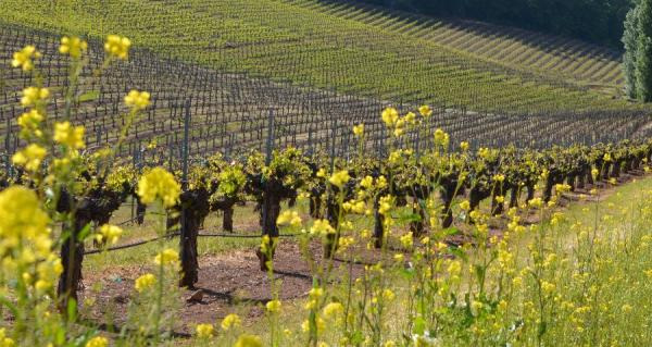 Travel California Wine Country's Back Roads This Summer: Sierra Foothills Spotlight - Cover Image