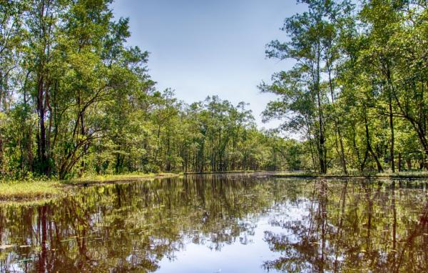 Ten Reasons to visit Suriname - Cover Image