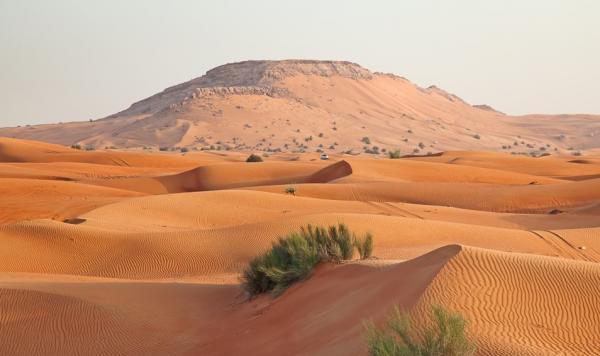 Wildlife in the Arabian Desert - Cover Image