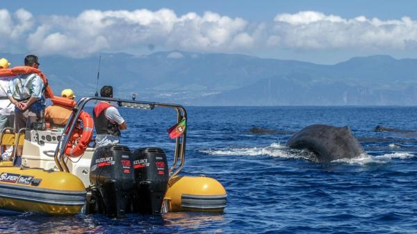 Azores Whale Watching TERRA AZUL Wins Sustainable Tour Operator of the Year  - Cover Image