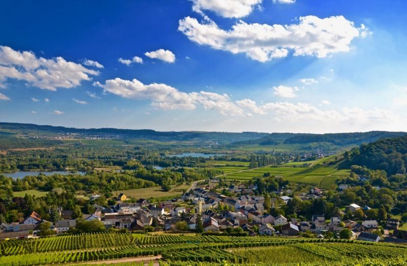 Exploring Luxembourg's Emerging Wine Region