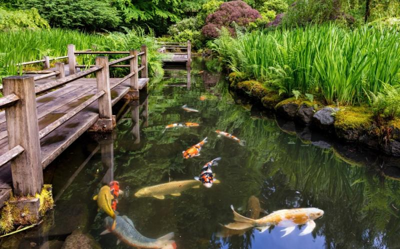 Reasons Why a Japanese Garden Might be the Escape you Need During COVID-19