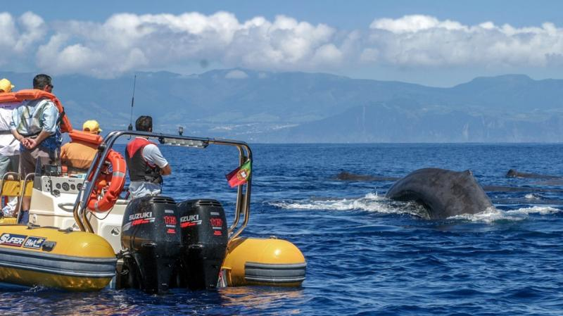 Azores Whale Watching TERRA AZUL Wins Sustainable Tour Operator of the Year