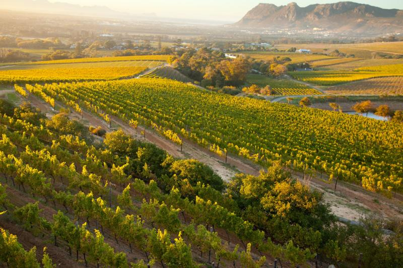 The Wine Regions of South Africa